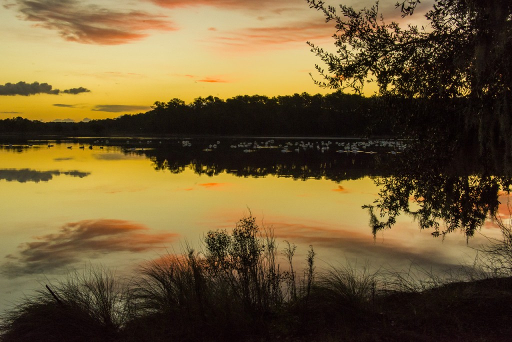 Miller's Pond Donnely NWR, SC