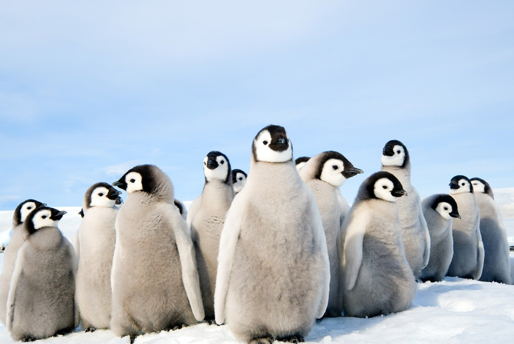 Penguin rookery.