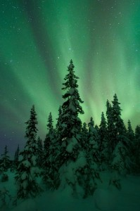 Aurora glow over the trees.