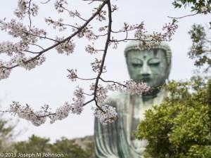 Daibutsu Blossoms