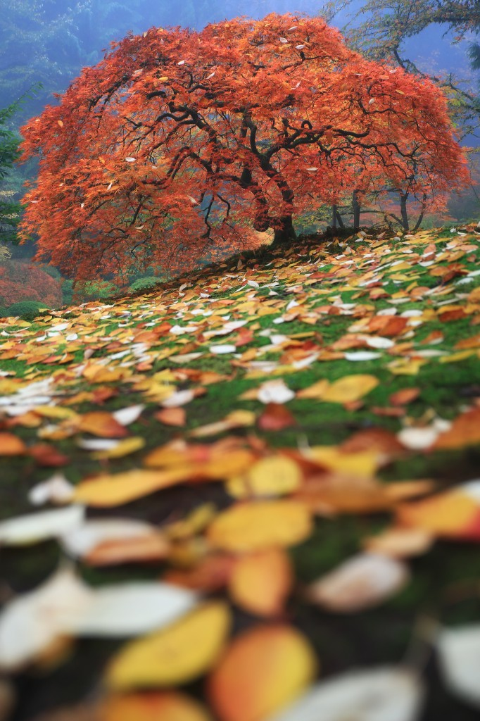 """Colorfall"" by Aaron Reed"