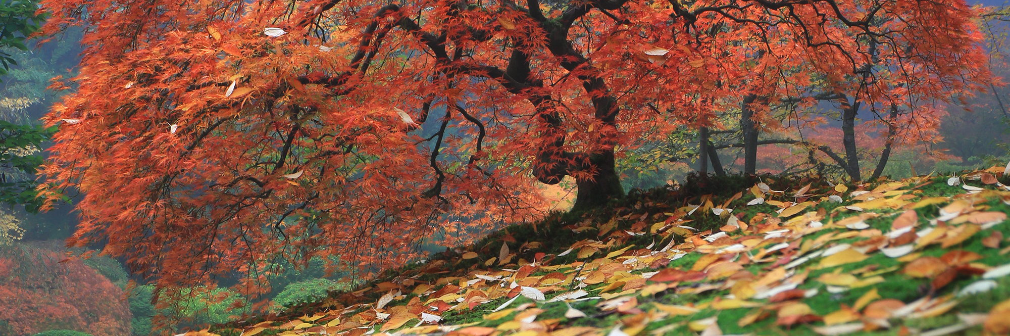 Colorfall by Aaron Reed
