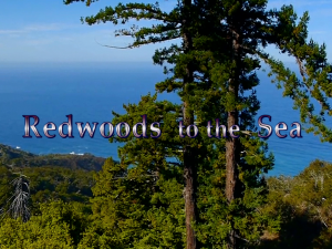 Redwoods to the Sea