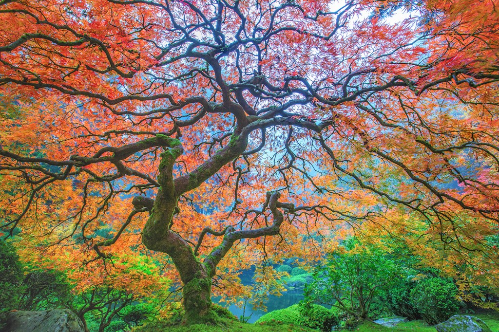 """Dragon's Breath"" by Aaron Reed"