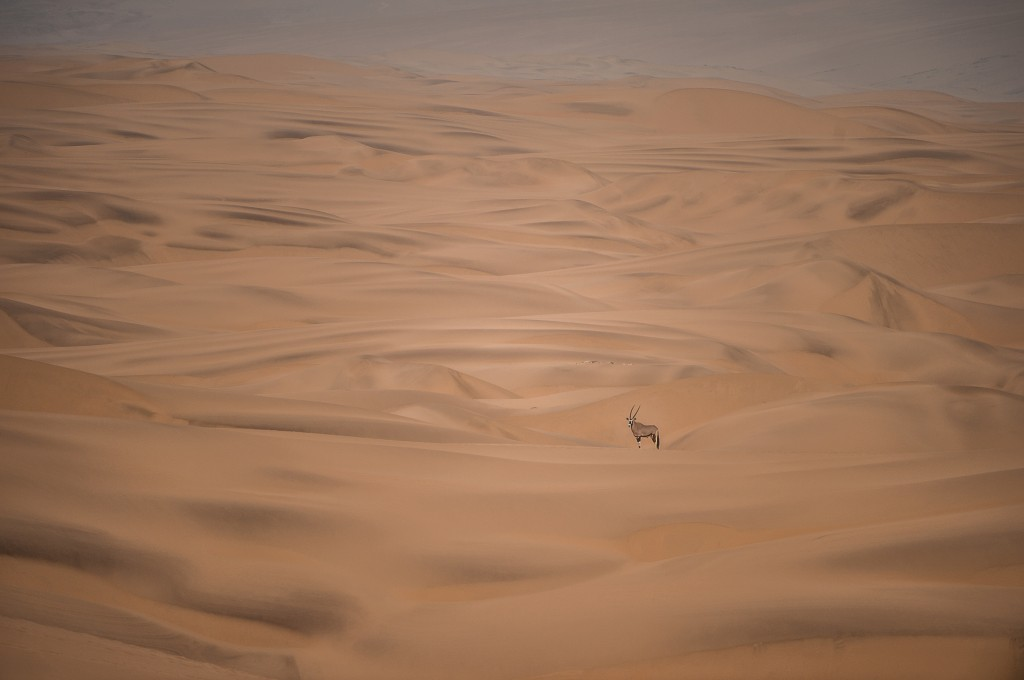"""Sand Dweller"" by John Glen Weaver"