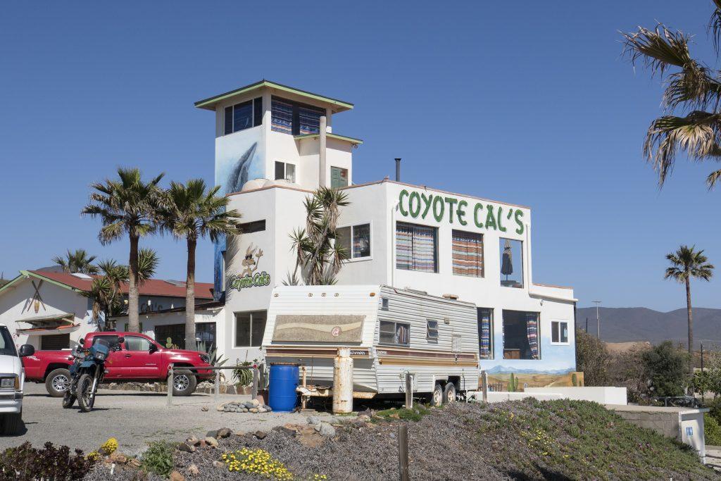 Baja, Coyote Cals-1