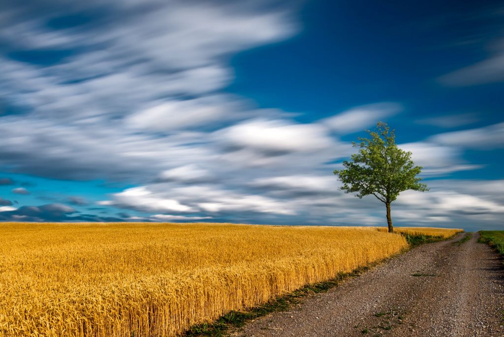 Golden Solitude (Belleville, ON, Canada)